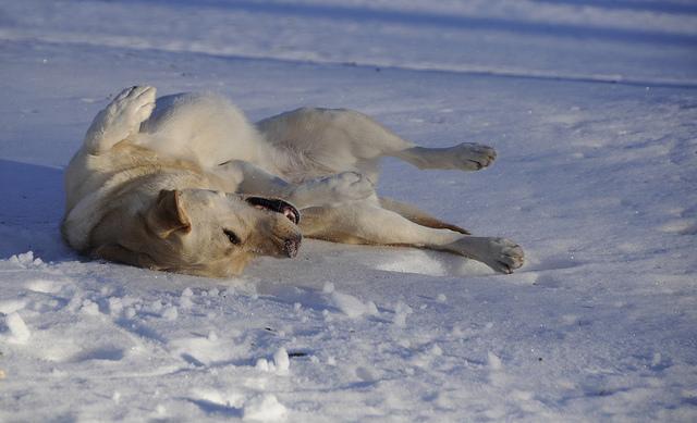 Soome loomakaitseseadus uueneb: loomaomanikelt nõutakse edaspidi oskusi